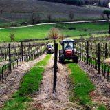 I passi necessari per diventare imprenditore agricolo