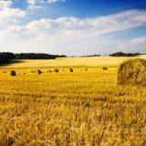 Aree fabbricabili e agricoltori